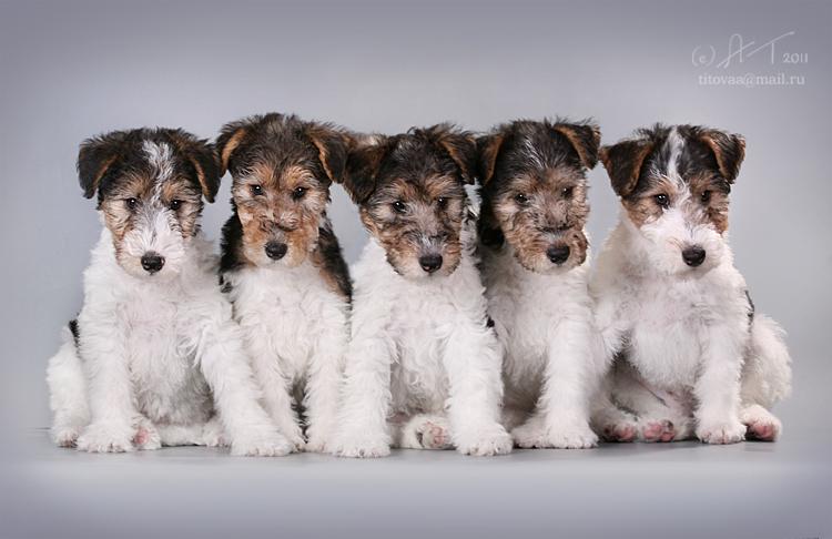 Отдаем собак и щенков в добрые руки Благотворительная
